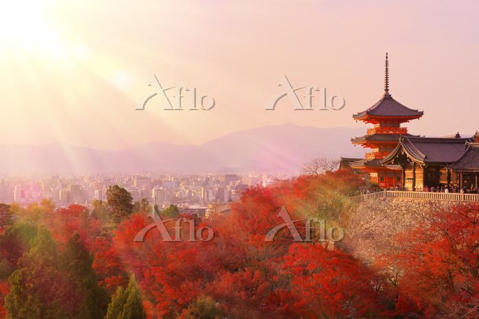 京都府 清水寺 夕日に染まる三重塔と紅葉と京都市街