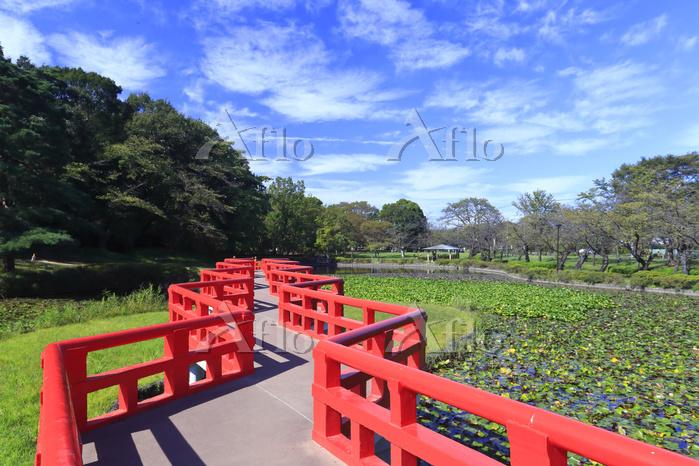 岩槻城址公園の八ッ橋