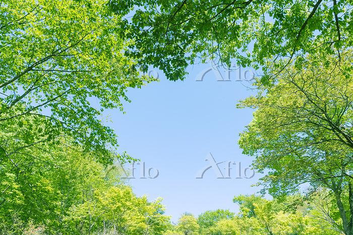 新緑の丸い隙間から覗く空