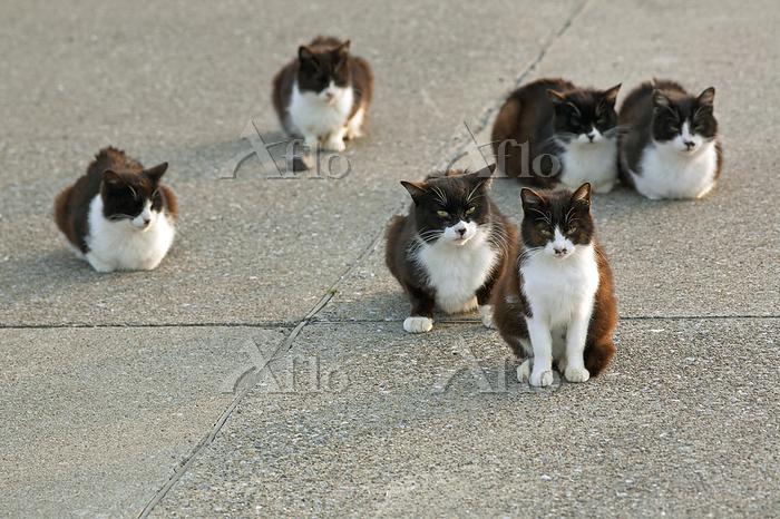 遊歩道に集まった6匹の白黒猫