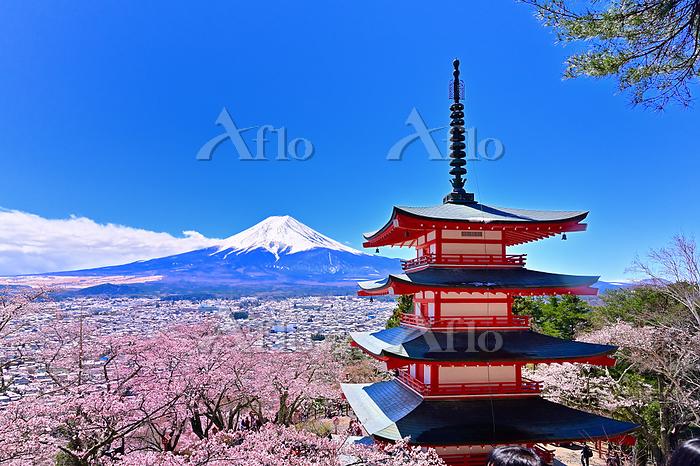 新倉山浅間公園と青空の富士山と満開の桜