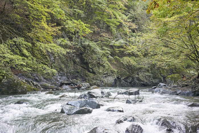 山の中を流れる多摩川(丹波川)の様子 (30cmものさし)