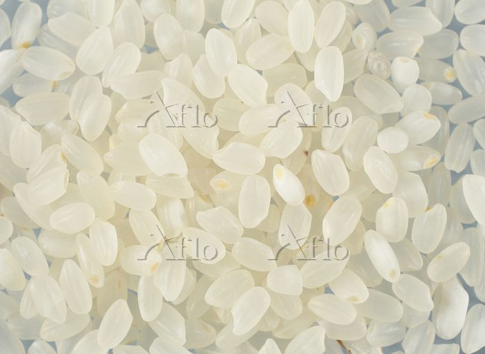 お米 米粒 ジャバニカ米