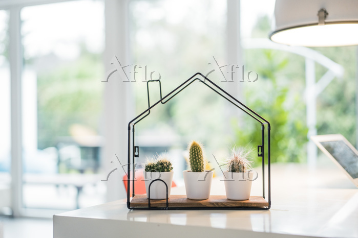 Tiny house model with cacti in・・・