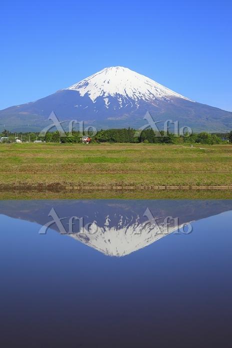 静岡県 残雪の富士山と水田に映る逆さ富士