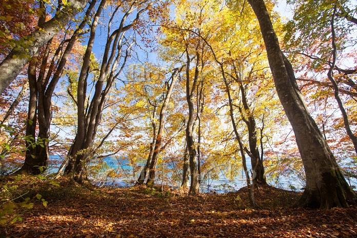 秋田県 落ち葉の森・十和田湖畔