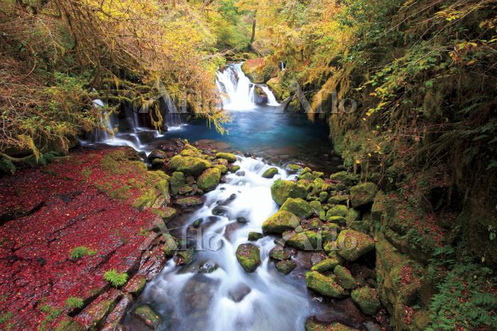 熊本県 紅葉に色づく菊池渓谷