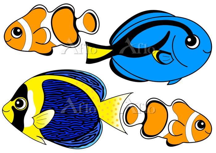熱帯魚のセット ナンヨウハギ クマノミ スクリブルド・エンゼ・・・