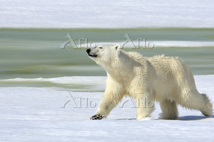 Bear on a lake on the peninsul・・・
