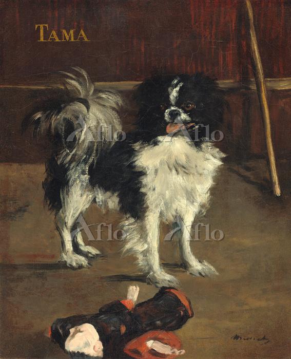 マネ 「タマ、日本犬」