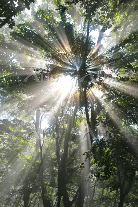 広島県 霧にけむる森に差し込む太陽光線