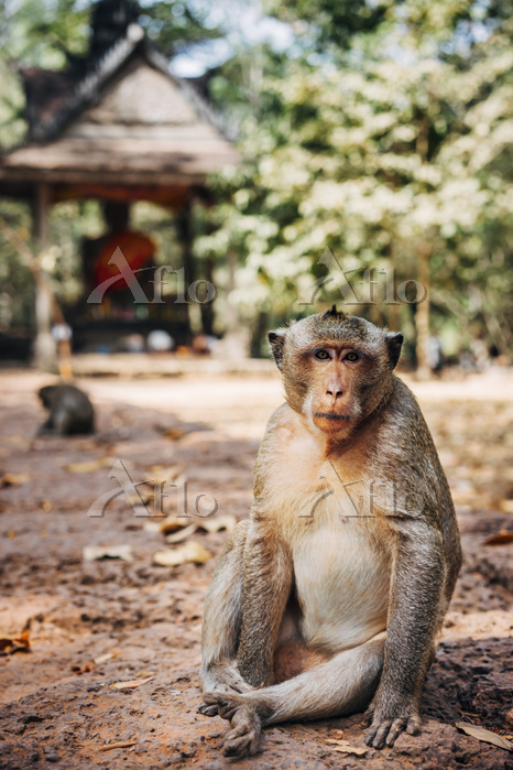 Portrait of monkey sitting out・・・