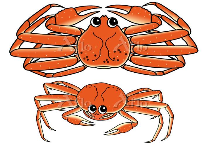 蟹のセット ズワイガニ セイコガニ ボイル