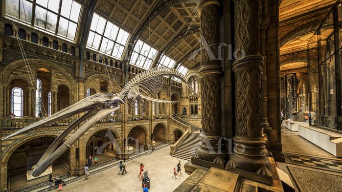 イギリス サウスケンジントン ロンドン自然史博物館