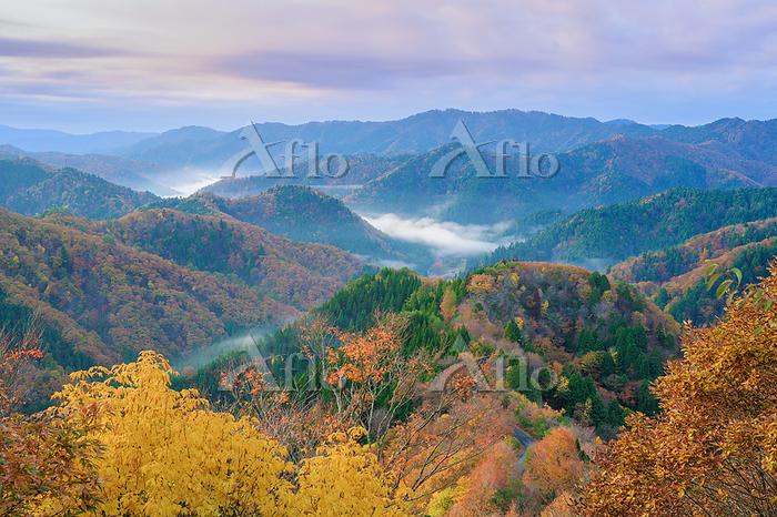 滋賀県 高島市 紅葉のおにゅう峠