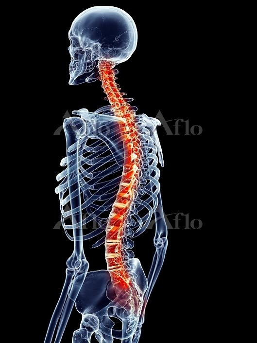 Human spine pain, illustration・・・