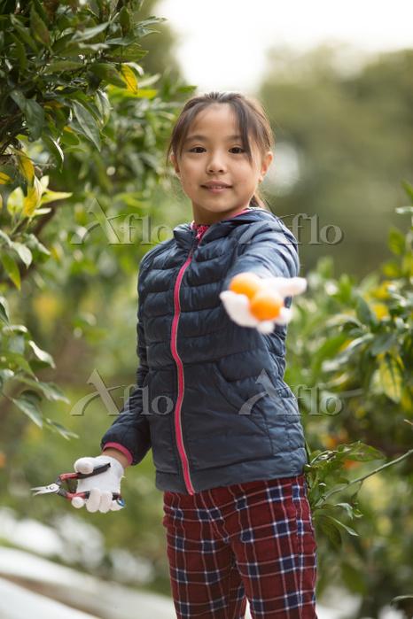 みかん畑と日本人の子供