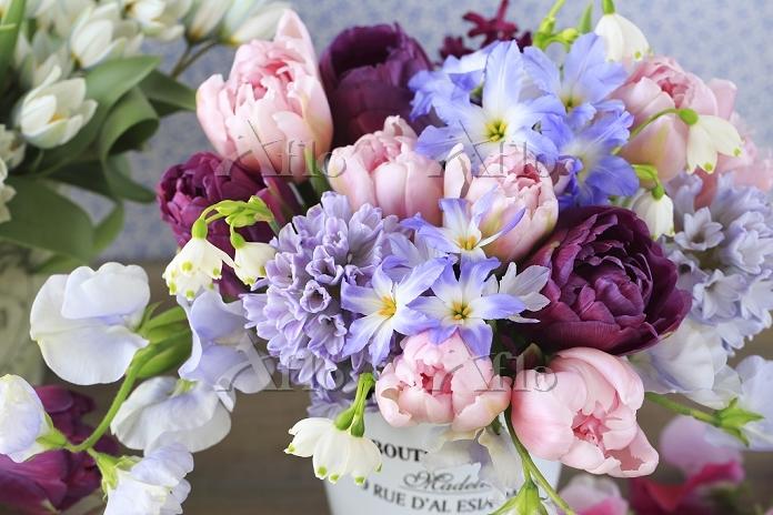 ピンクと紫のチューリップ