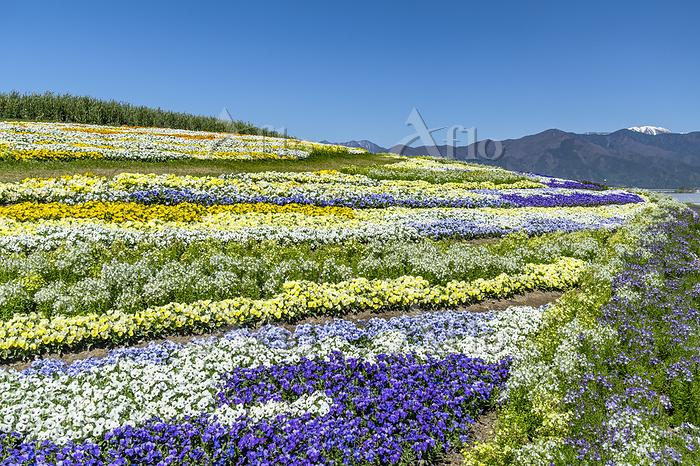 信州花フェスタ2019 北アルプスと花の丘