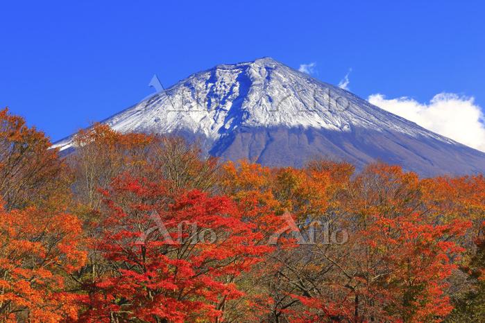 山梨県 富士桜自然墓地公園の紅葉と富士山