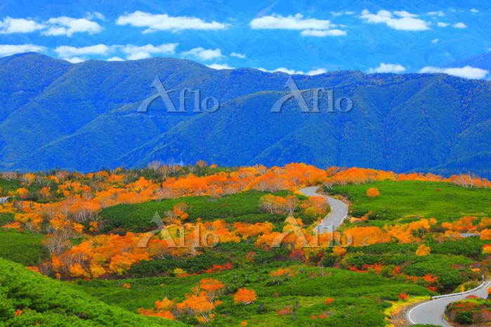 長野県 秋の乗鞍高原