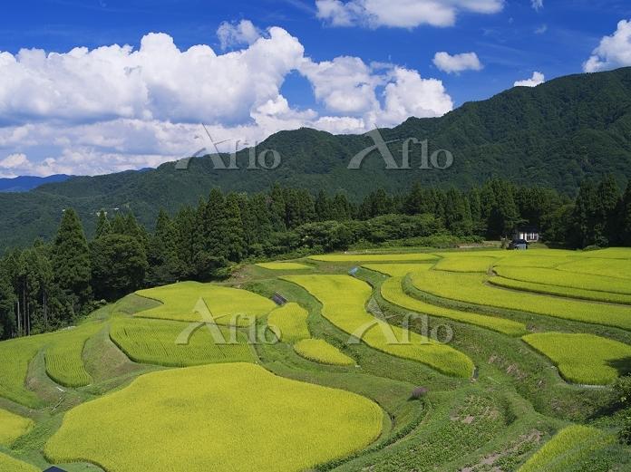 兵庫県 うへ山の棚田