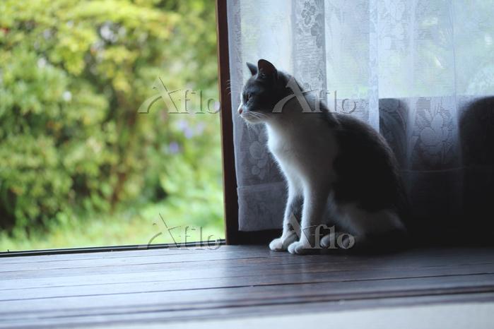 縁側で座る猫