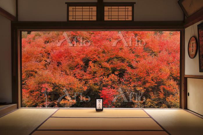 兵庫県 但馬安国寺 本堂越しに見るドウダンツツジの紅葉