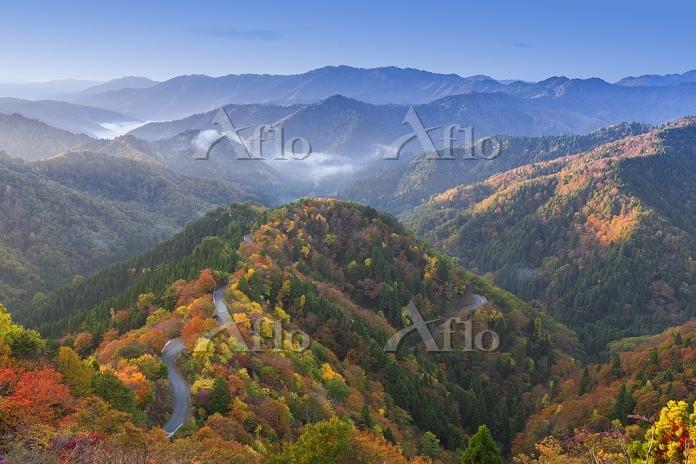 滋賀県 紅葉のおにゅう峠と朝霧