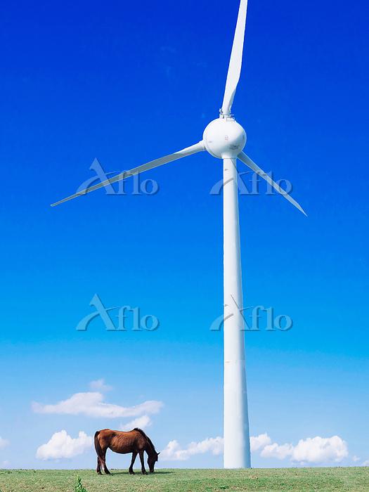 馬と風力発電