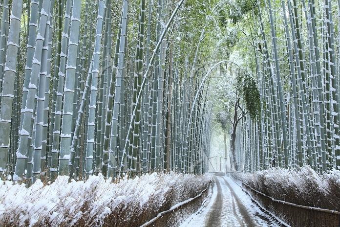 京都府 雪景色の竹林の小径