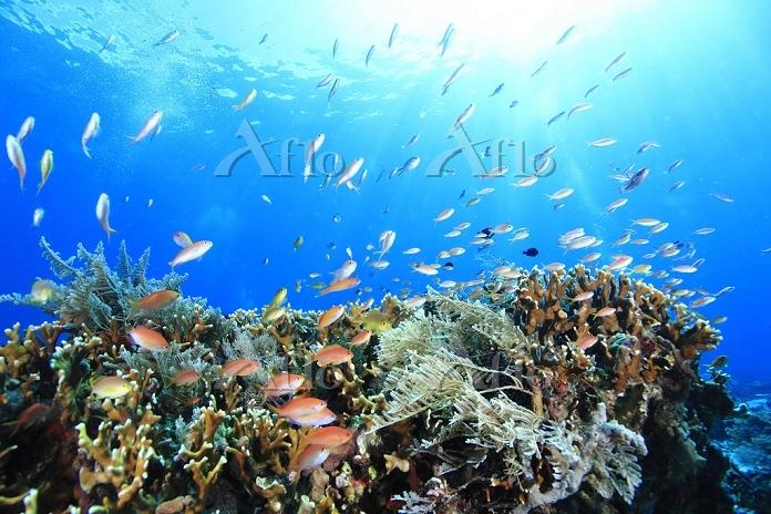 インドネシア 海 サンゴと熱帯魚