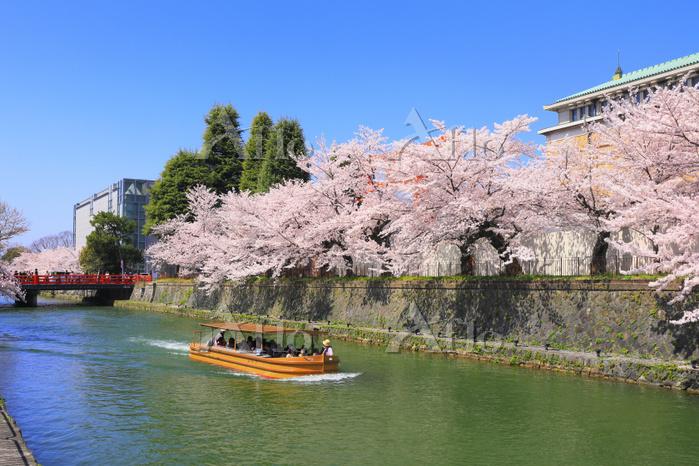 京都府 岡崎疎水の桜並木と慶流橋と十石舟めぐり