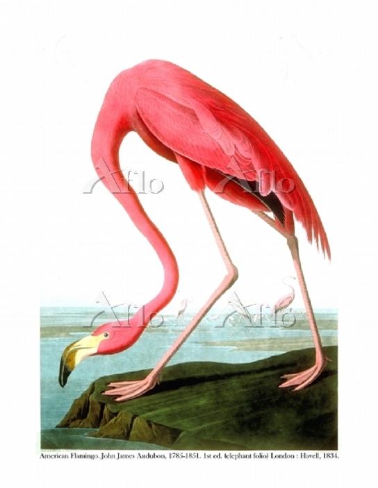 Artist: Audubon, John James (1・・・
