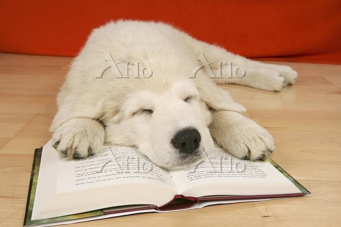 本の上で眠る犬