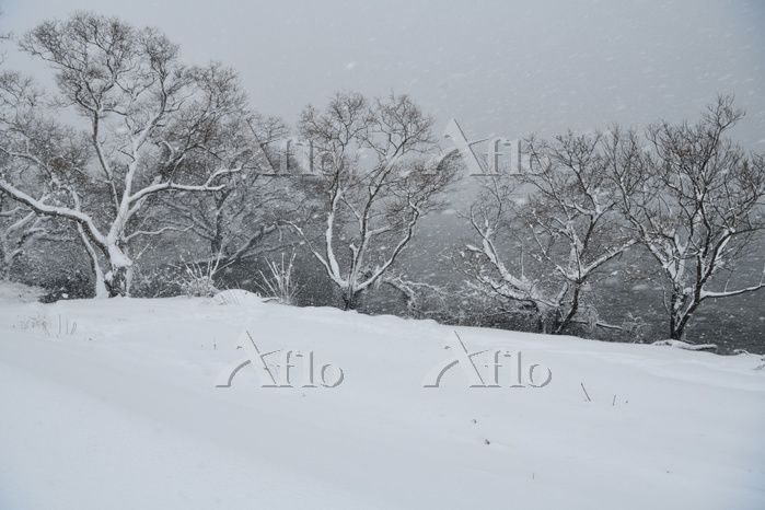 滋賀県 雪降る琵琶湖