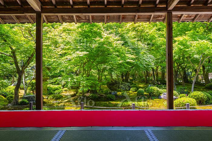 新緑の圓光寺