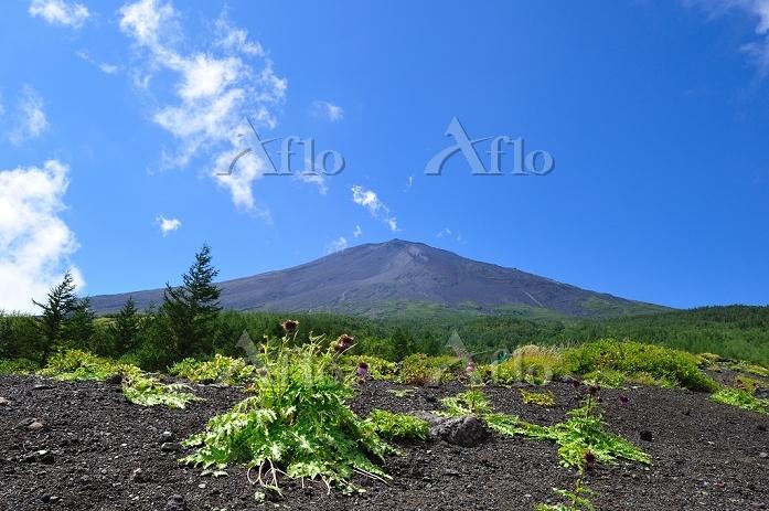 静岡県 富士山 須走5合目