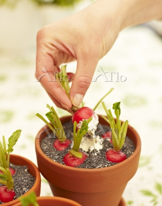 Radishes with a poppy seed dip・・・