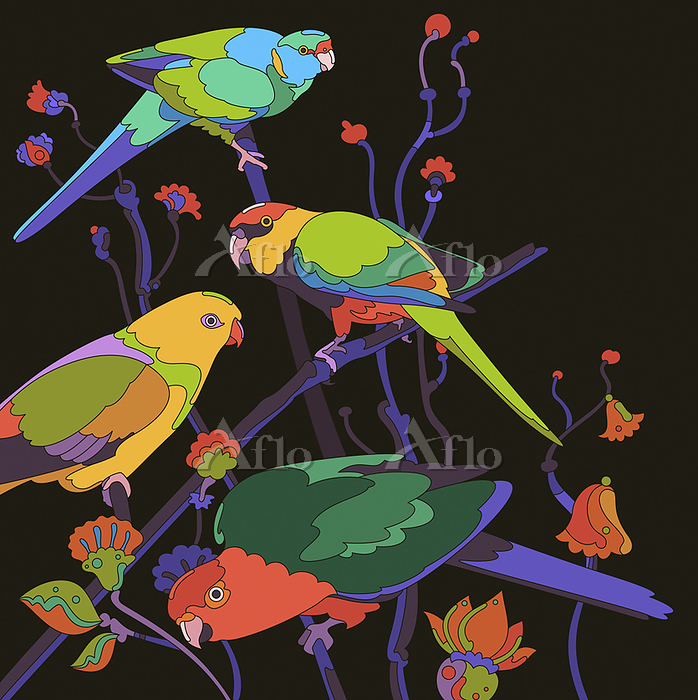 Four brightly coloured parrots・・・