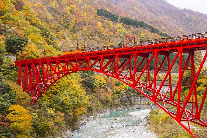 富山県 新山彦橋を行く黒部峡谷鉄道
