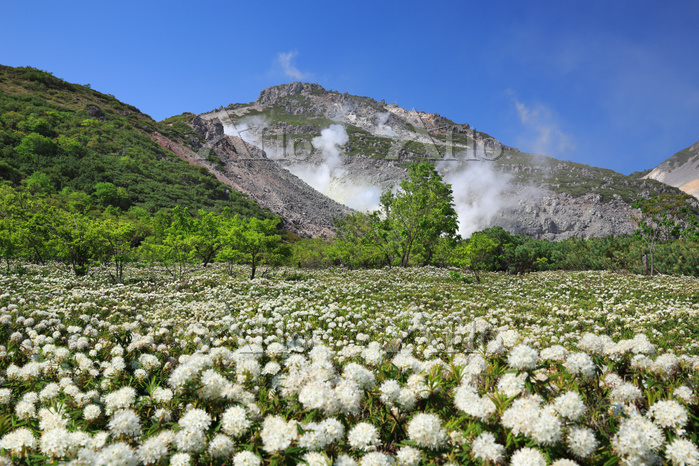 北海道 イソツツジと硫黄山
