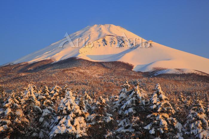 静岡県 水ヶ塚公園から見る朝日に染まる冠雪した富士山