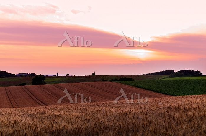 北海道 小麦畑の丘の日没