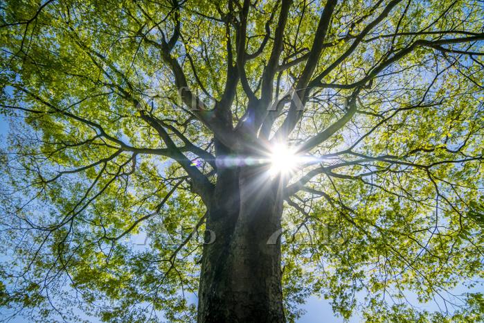 新緑が映える逆光の木