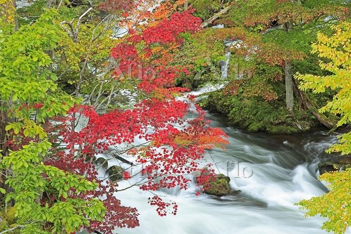 北海道 滝見橋から阿寒川の紅葉