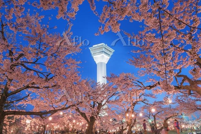 北海道 桜咲く五稜郭と五稜郭タワー夕景