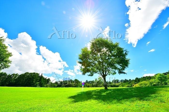青空と緑の丘の木と逆光の太陽