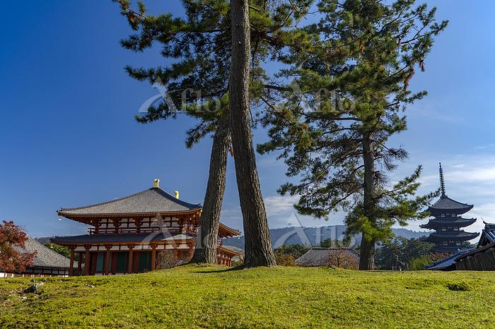 奈良県 興福寺中金堂