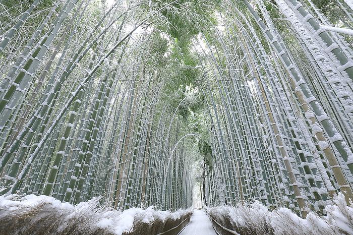 京都府 嵐山竹林の小径の雪景色